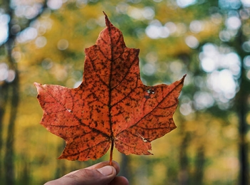 Canadá Tradicional