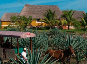 Yucatán al Máximo